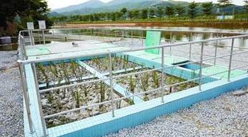 分散式生活污水办理ces环境服务认证需要多久?